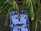 Fest für Afrika Straußenfarm Mhou Rülzheim - 3