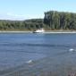 Rhein mit Containerschiff