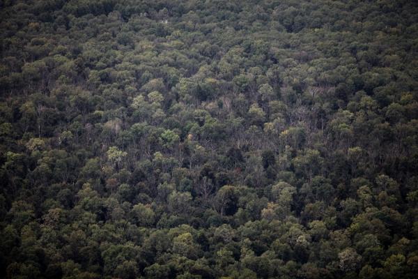 Wald und Baumkronen von oben