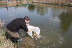 Fischer setzt Fische aus einem Eimer in einen Teich