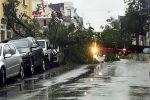 Baum am 21.10.2021 in Ratingen umgestürzt